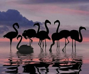 flamingo, animal, and sunset image