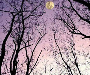 moon, sky, and trees image