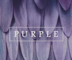 purple, wallpaper, and colors image