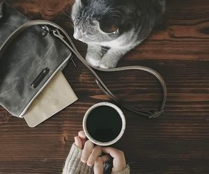 coffee and cat image