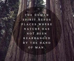 nature, quote, and spirit image
