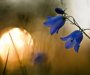 flowers, blue, and light image