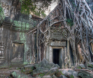 tree, twisted, and ancient ruins image