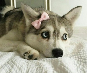 dog and pet image