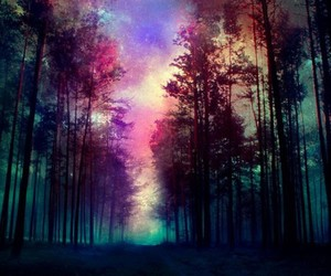forest, tree, and galaxy image