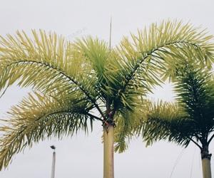 florida, green, and hb2 image