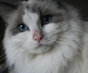 animals, beautiful, and beauty image