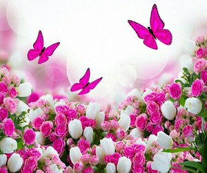 flowers, butterfly, and pink image