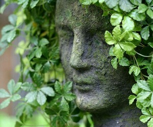 garden, green, and ivy image