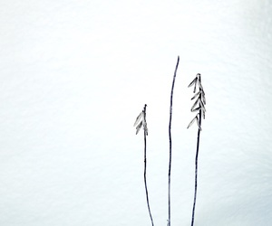 冬, 植物, and 枯れ葉 image