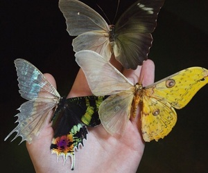 butterfly, theme, and aesthetic image