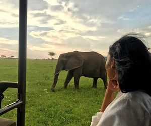 beautiful, elephant, and place image