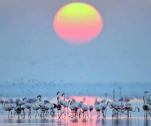 flamingo and sunset image