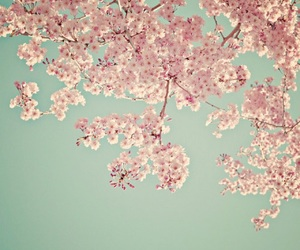 spring, beautiful, and pink blossoms image