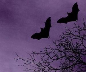 purple, bats, and dark image