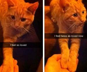 cat, funny, and love image