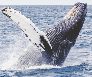 animals, blue, and whale image