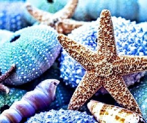 seashells and starfish image