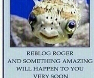 fish, funny, and luck image
