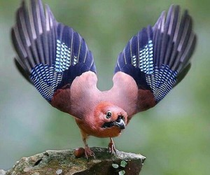 Amazon, birds, and wild image
