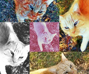 cats, alteredart, and color image