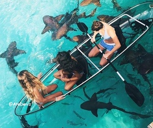 summer, friends, and shark image
