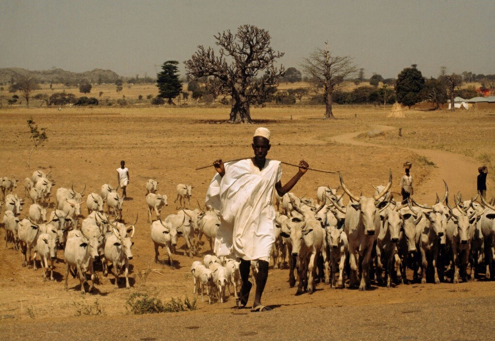 africa, photography, and sheep image
