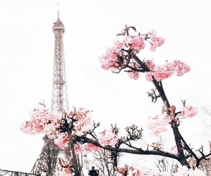 flowers, paris, and travel image