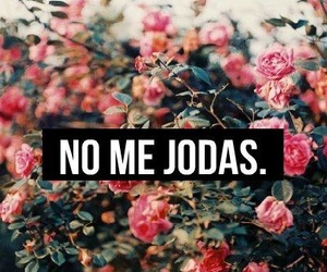 no me jodas, flowers, and wallpaper image