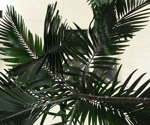 green, palm trees, and wallpaper image