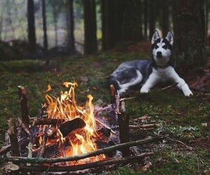 dog, nature, and fire image