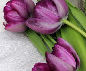beautiful, tulips, and girly image