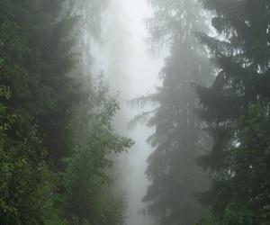 tree, creepy, and fog image