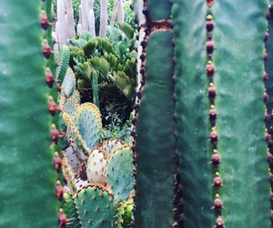 background, beautiful, and 🌵 image