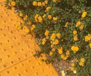 Výsledek obrázku pro yellow aesthetic