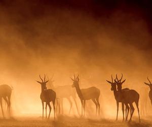 beautiful, gazelle, and light image