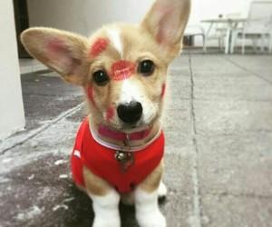 adorable, animal, and animals image