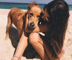 beach, summer, and dog image