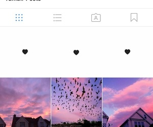 birds, posts, and pretty image