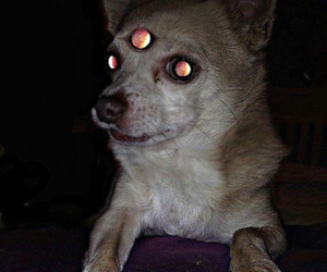 dog and diabolic image