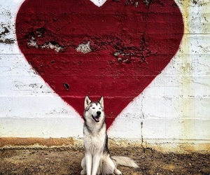 dog, empowerment, and goals image