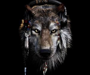 wolf, animal, and music image