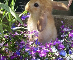 animal, flowers, and bunny image