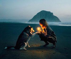 amigo, dog, and luz image