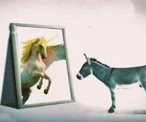 donkey and horse image