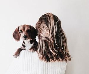 dog, animal, and girl image