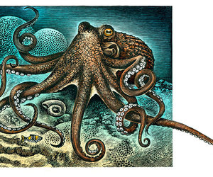 animal, octopus, and art image