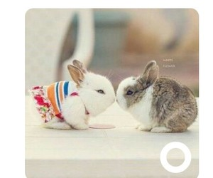 animals, rabits, and preety image