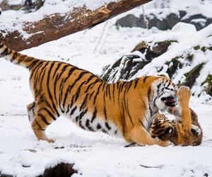 animal, cat, and de image