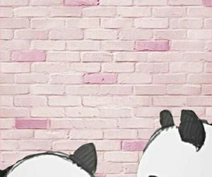 panda, wallpaper, and pink image